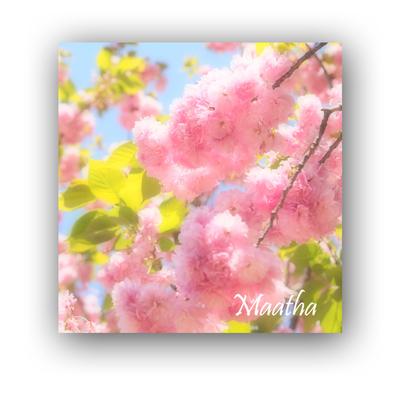 201604上野恩賜公園桜