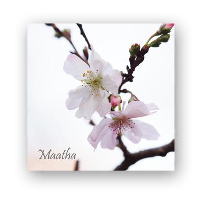 201611十月桜